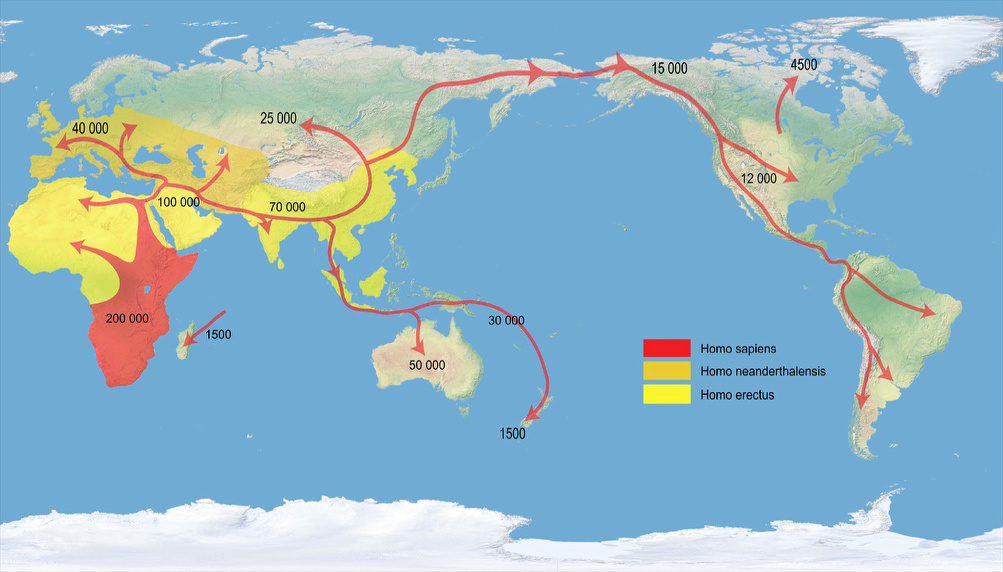 Early human migrations, projected to Patterson Cylindrical Projection.